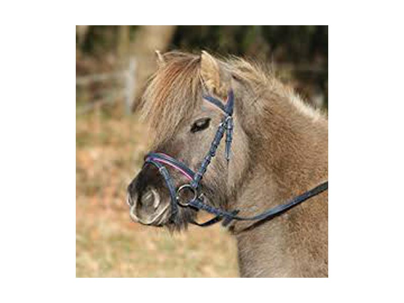 Trense Unicorn 2 für Minishetty und Shetty